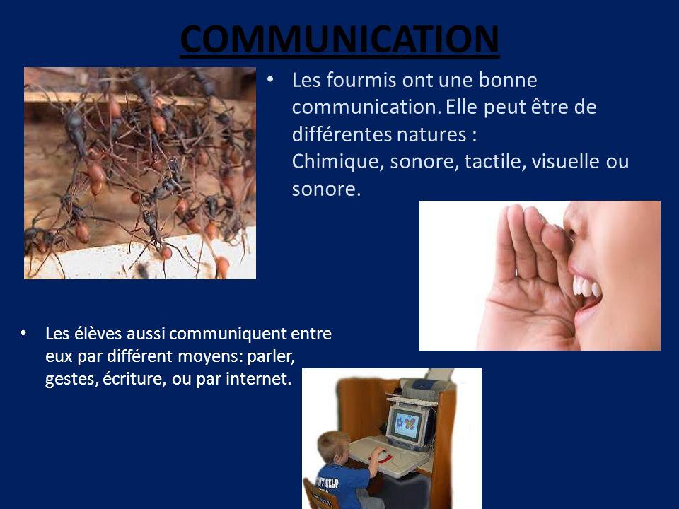 COMMUNICATION Les fourmis ont une bonne communication. Elle peut être de différentes natures : Chimique, sonore, tactile, visuelle ou sonore.