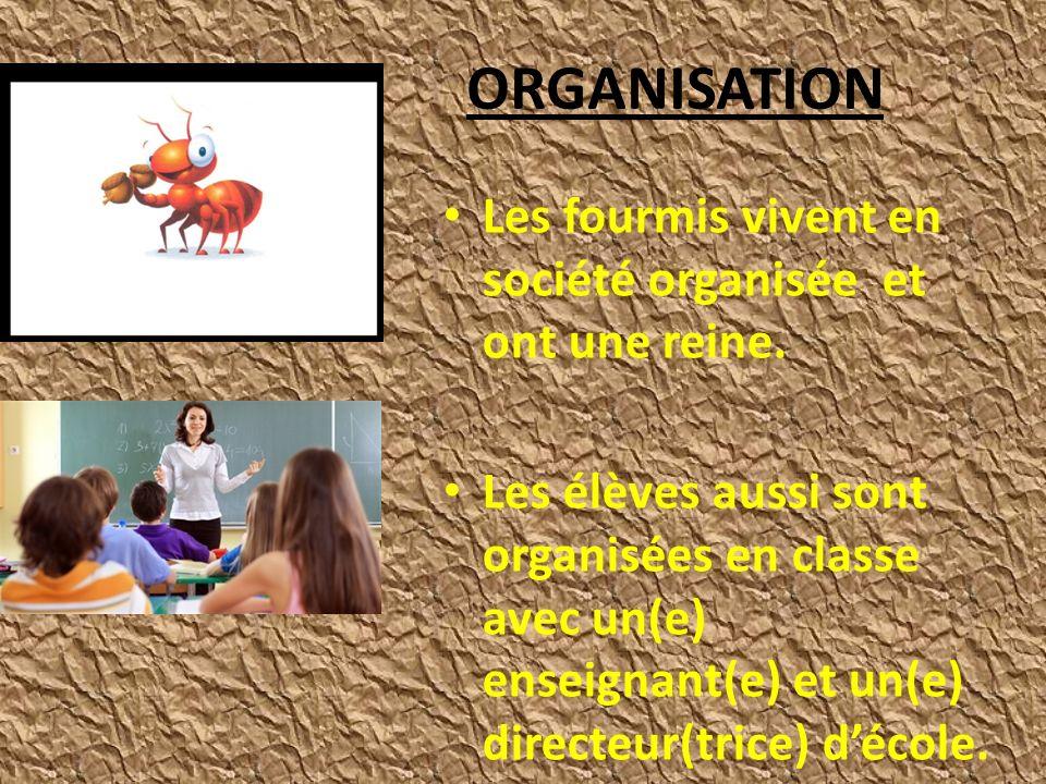 ORGANISATION Les fourmis vivent en société organisée et ont une reine.