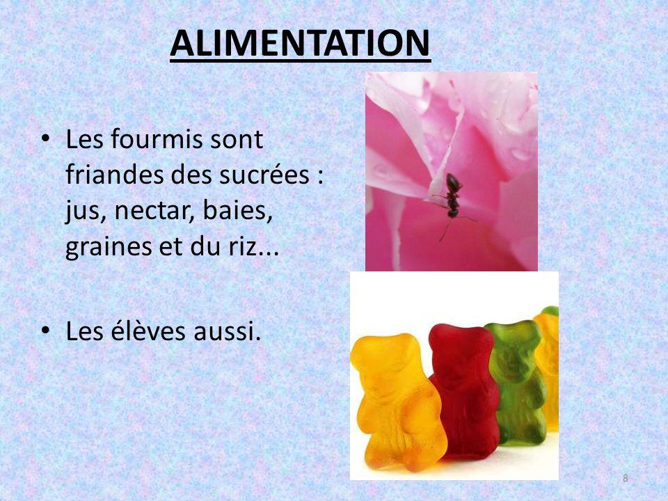 ALIMENTATION Les fourmis sont friandes des sucrées : jus, nectar, baies, graines et du riz...