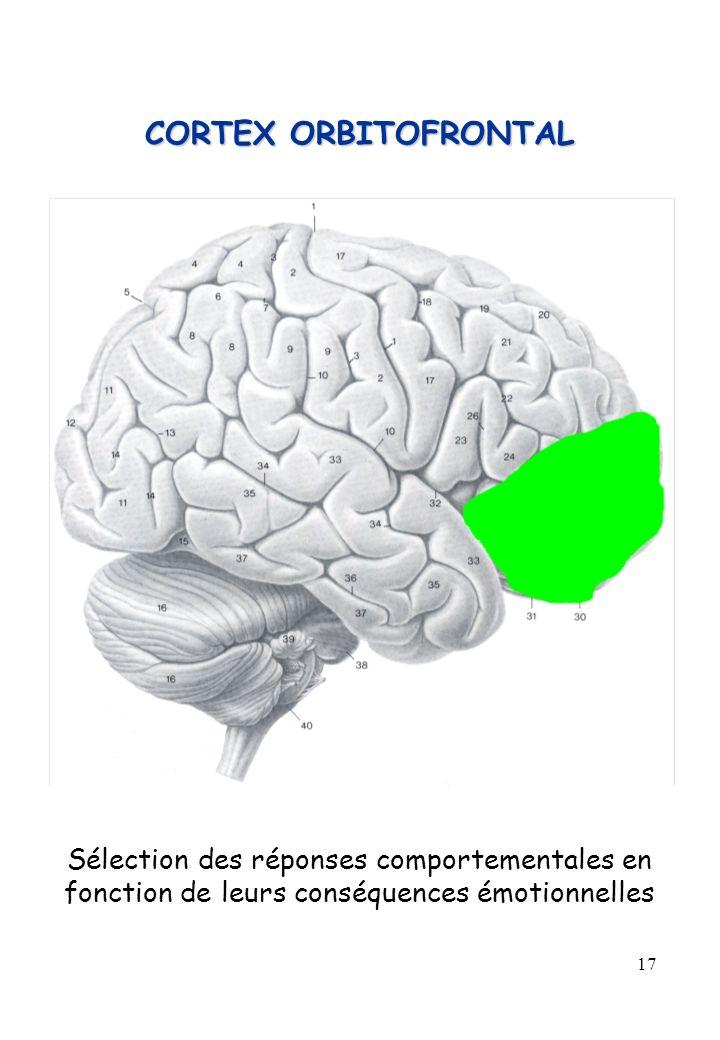 CORTEX ORBITOFRONTAL Sélection des réponses comportementales en fonction de leurs conséquences émotionnelles.