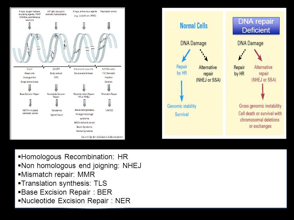 Homologous Recombination: HR Non homologous end joigning: NHEJ
