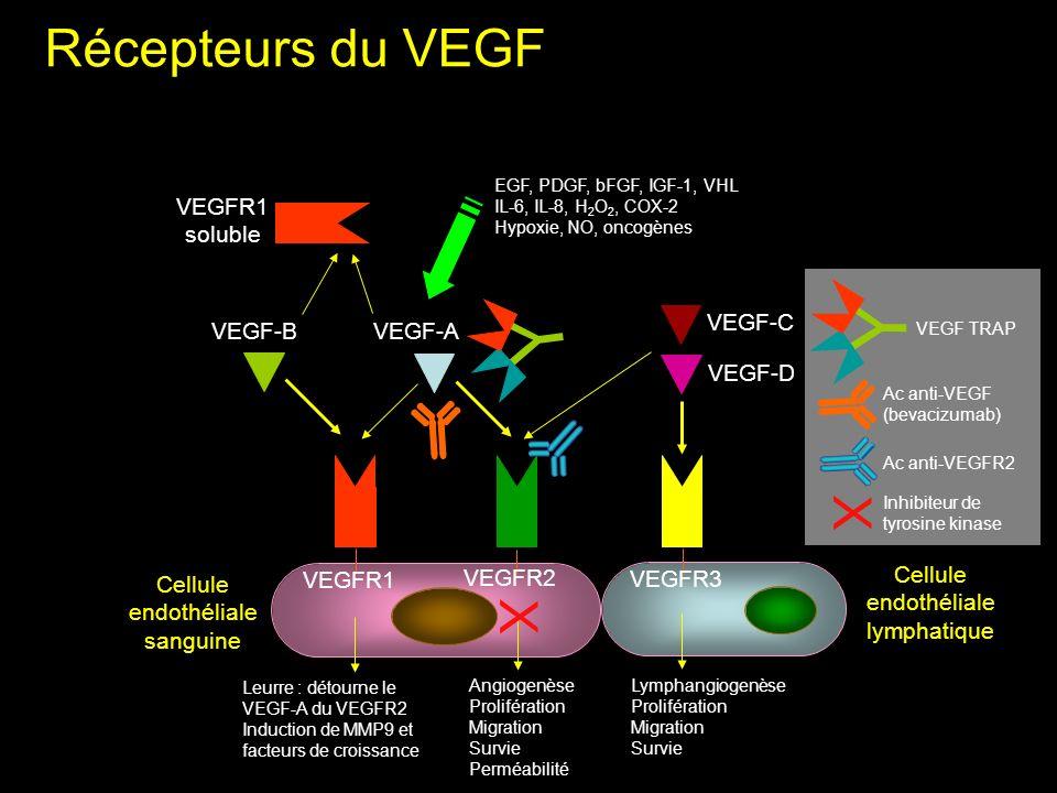 Y Y Récepteurs du VEGF X X VEGFR1 soluble VEGF-C VEGF-B VEGF-A VEGF-D