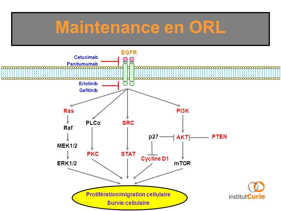 Prolifération/migration cellulaire