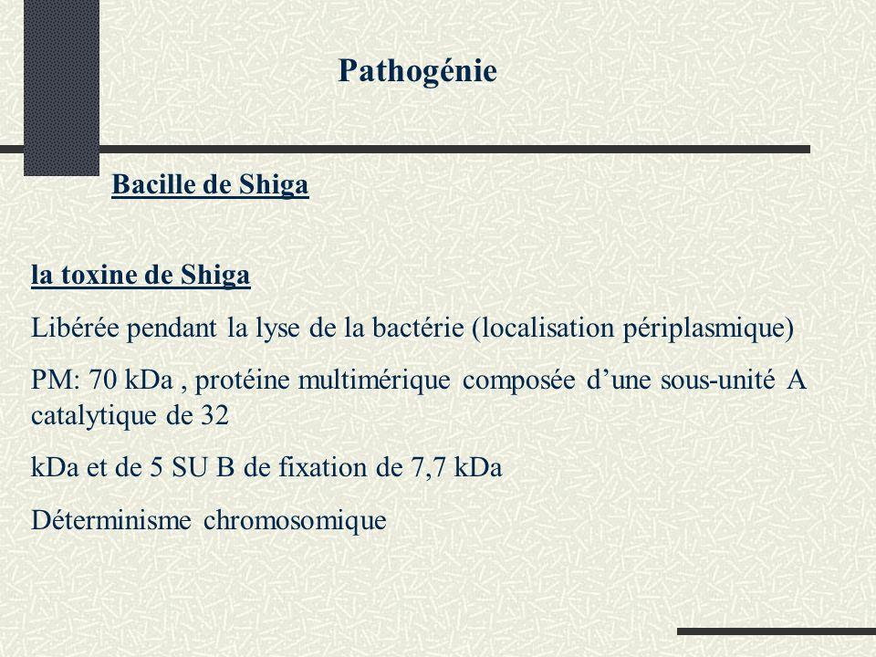 Pathogénie Bacille de Shiga la toxine de Shiga