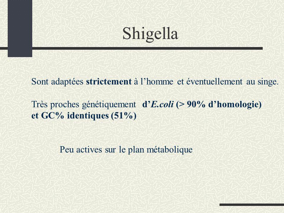 Shigella Sont adaptées strictement à l'homme et éventuellement au singe. Très proches génétiquement d'E.coli (> 90% d'homologie)