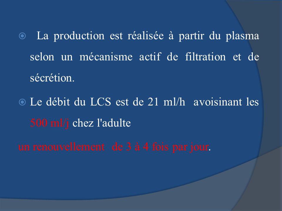 La production est réalisée à partir du plasma selon un mécanisme actif de filtration et de sécrétion.