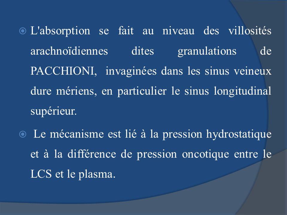 L absorption se fait au niveau des villosités arachnoïdiennes dites granulations de PACCHIONI, invaginées dans les sinus veineux dure mériens, en particulier le sinus longitudinal supérieur.