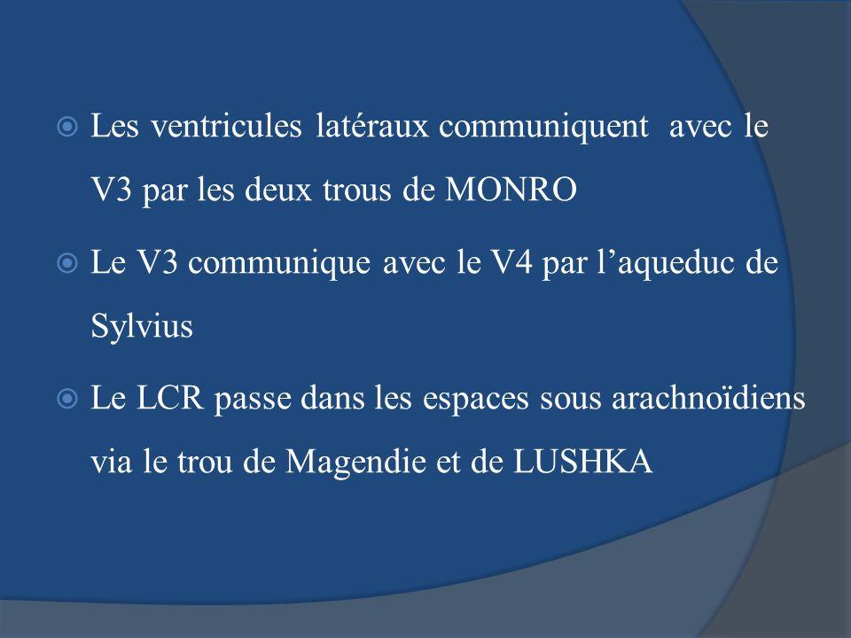 Les ventricules latéraux communiquent avec le V3 par les deux trous de MONRO