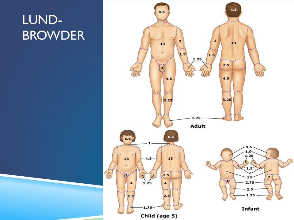 Lund- browder