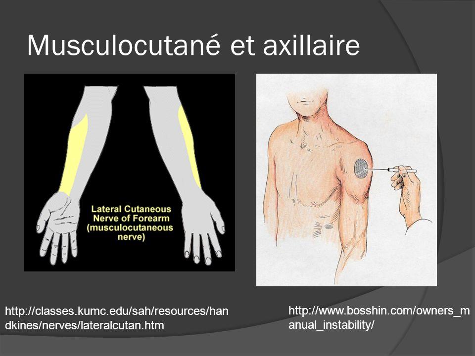 Musculocutané et axillaire