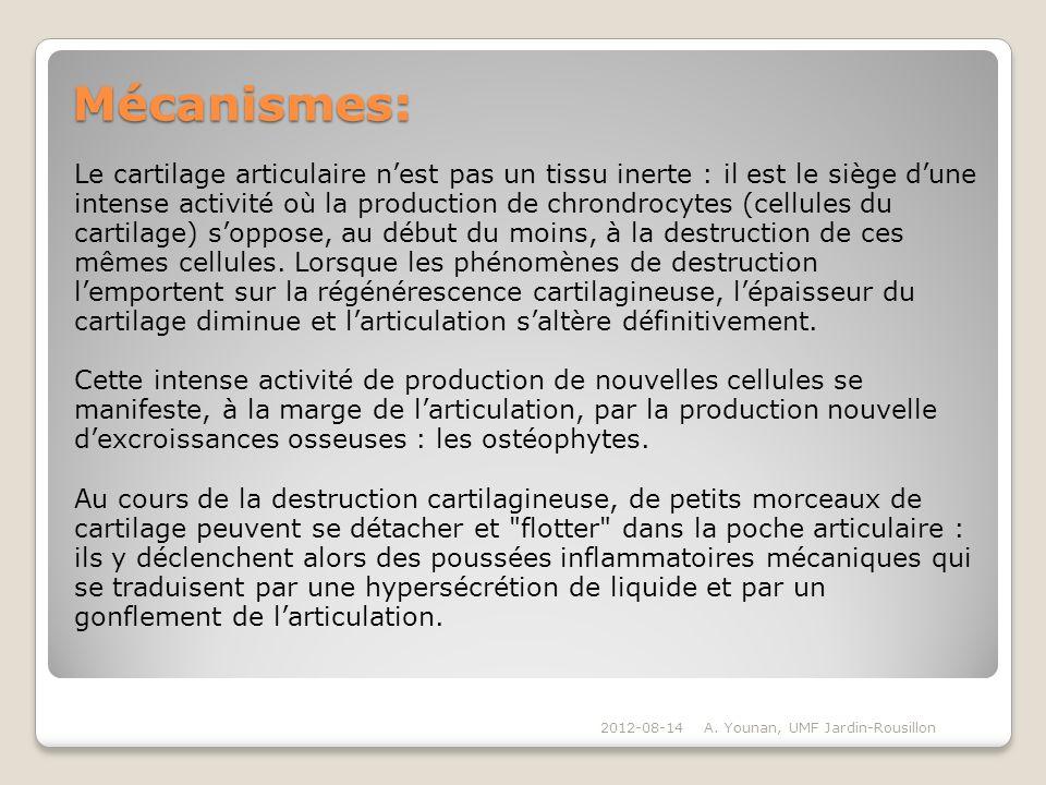Mécanismes: Le cartilage articulaire n'est pas un tissu inerte : il est le siège d'une.