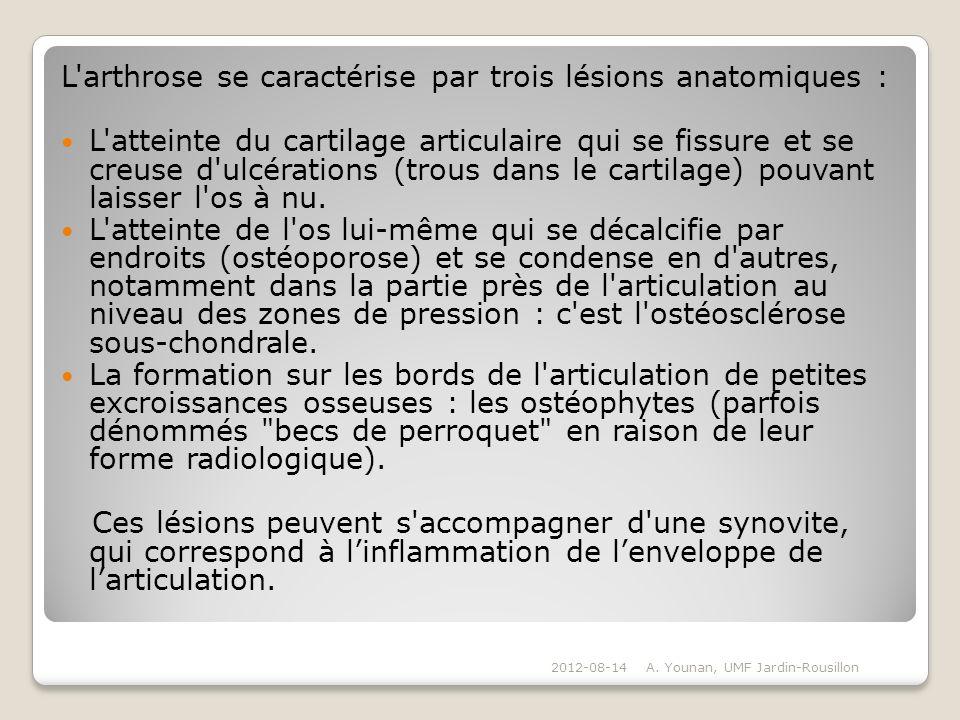 L arthrose se caractérise par trois lésions anatomiques :