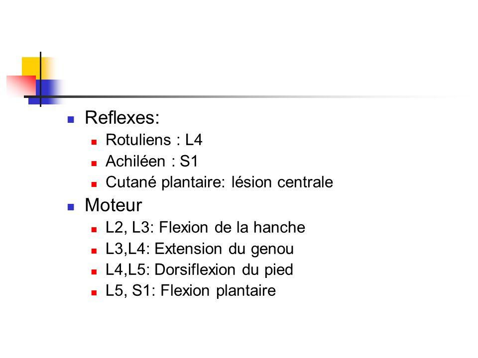 Reflexes: Moteur Rotuliens : L4 Achiléen : S1