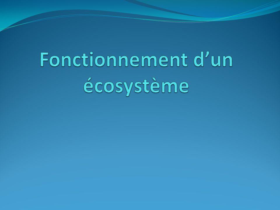 Fonctionnement d'un écosystème