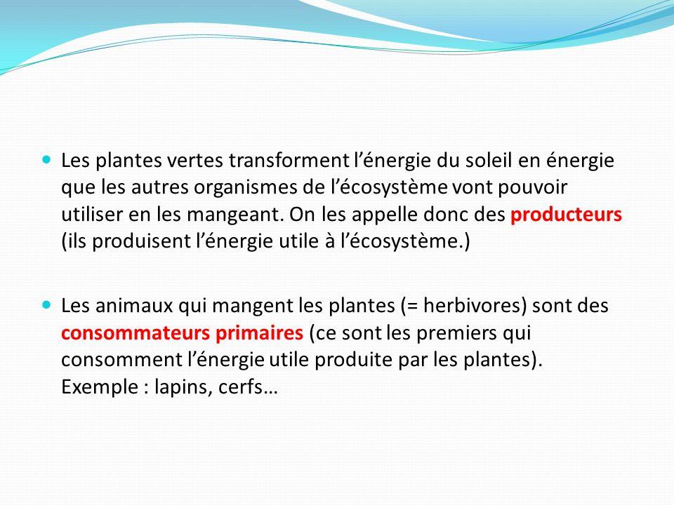 Les plantes vertes transforment l'énergie du soleil en énergie que les autres organismes de l'écosystème vont pouvoir utiliser en les mangeant. On les appelle donc des producteurs (ils produisent l'énergie utile à l'écosystème.)