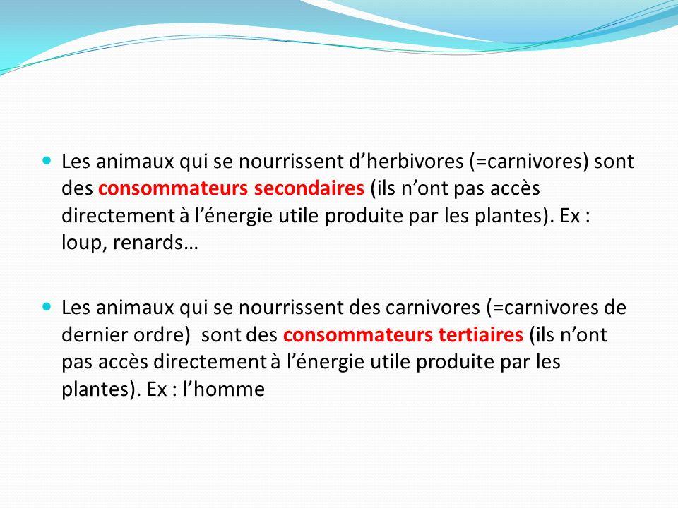 Les animaux qui se nourrissent d'herbivores (=carnivores) sont des consommateurs secondaires (ils n'ont pas accès directement à l'énergie utile produite par les plantes). Ex : loup, renards…