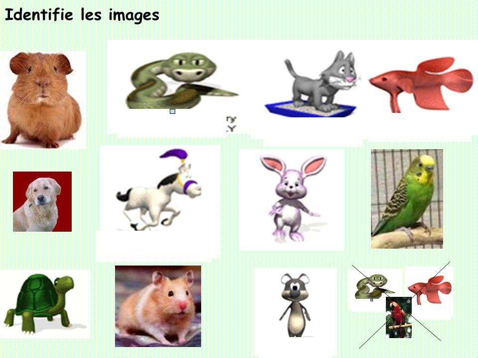 Identifie les images