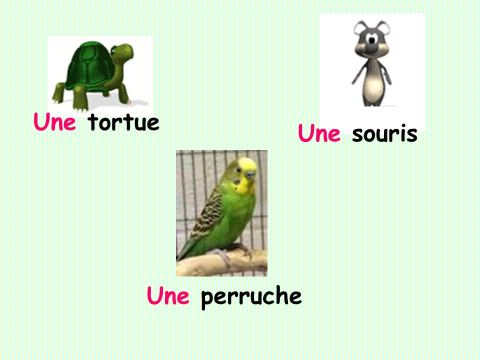 Une tortue Une souris Une perruche