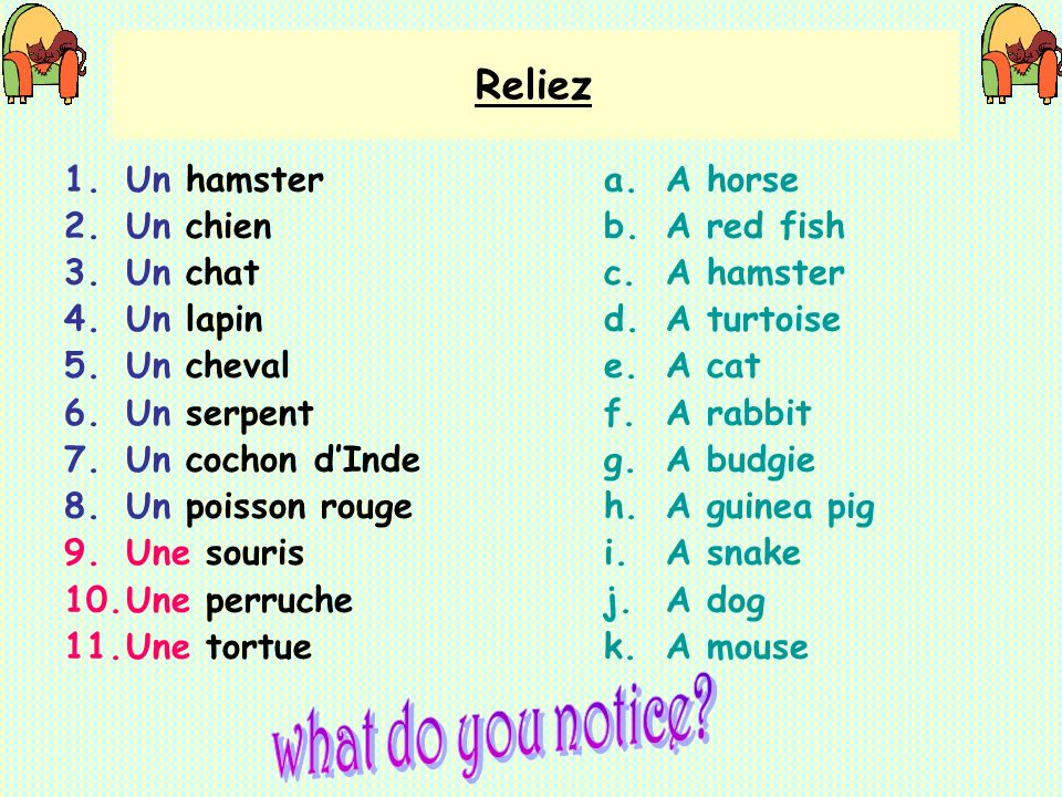 what do you notice Reliez Un hamster Un chien Un chat Un lapin