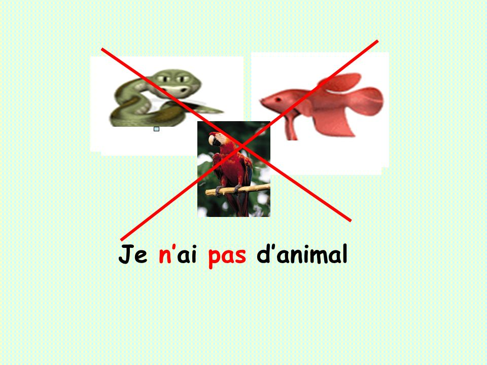Je n'ai pas d'animal