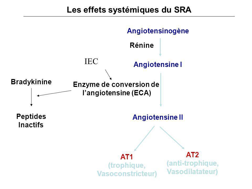 Les effets systémiques du SRA Enzyme de conversion de