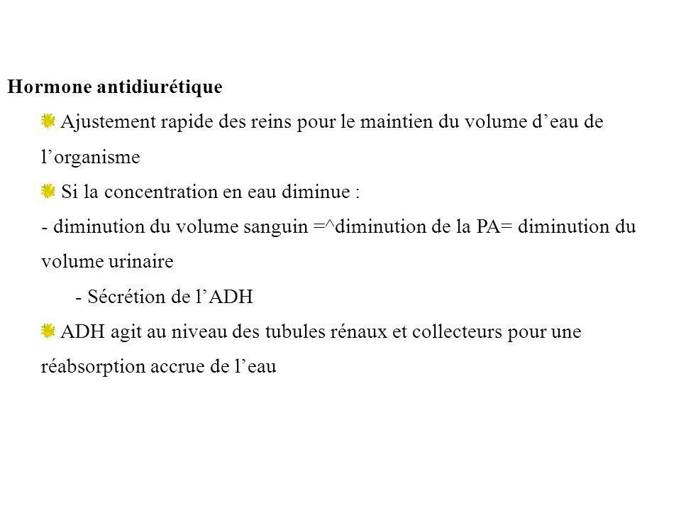 Hormone antidiurétique