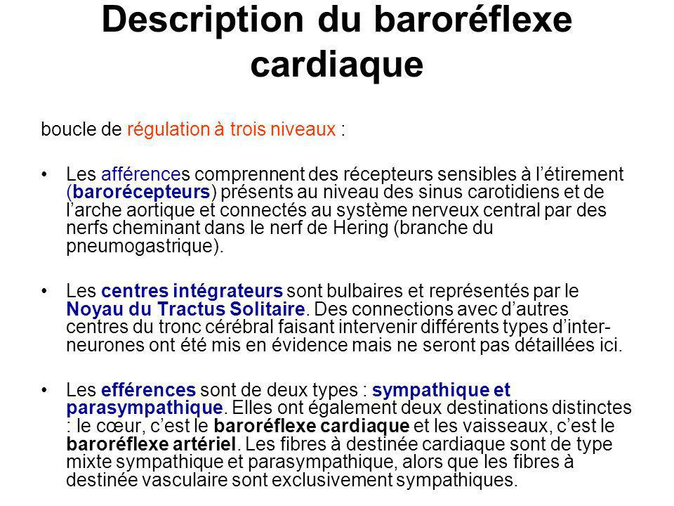 Description du baroréflexe cardiaque