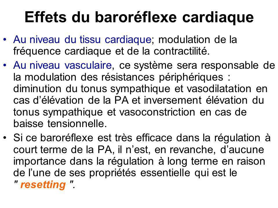 Effets du baroréflexe cardiaque