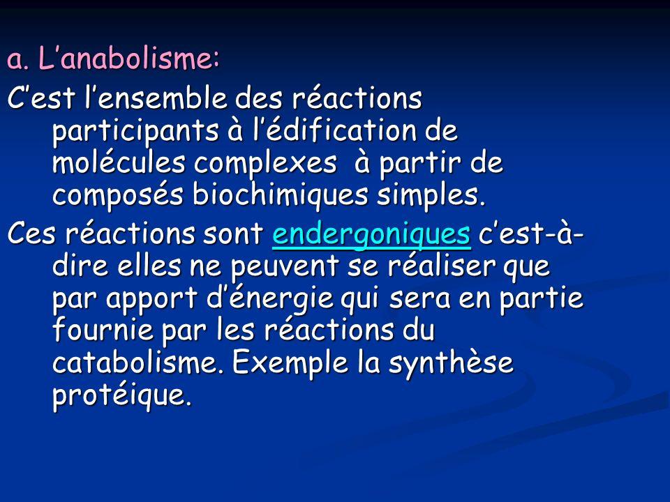 a. L'anabolisme: C'est l'ensemble des réactions participants à l'édification de molécules complexes à partir de composés biochimiques simples.