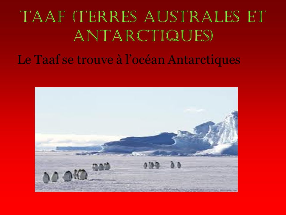 Taaf (terres australes et antarctiques)