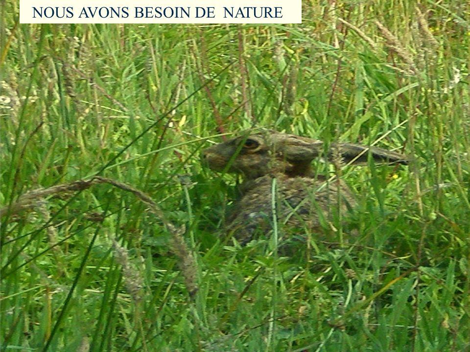 Nous avons besoin de Nature