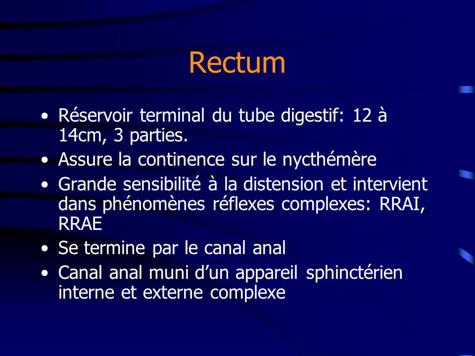 Rectum Réservoir terminal du tube digestif: 12 à 14cm, 3 parties.
