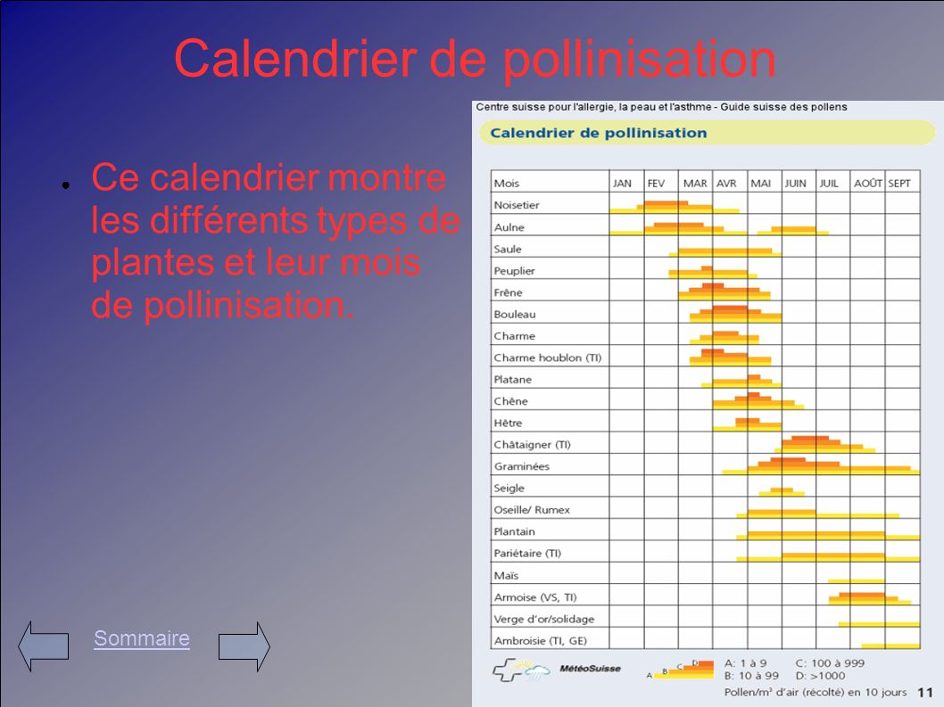 Calendrier de pollinisation