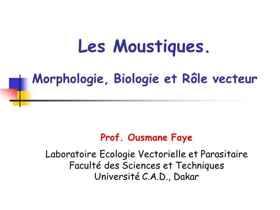 Les Moustiques. Morphologie, Biologie et Rôle vecteur