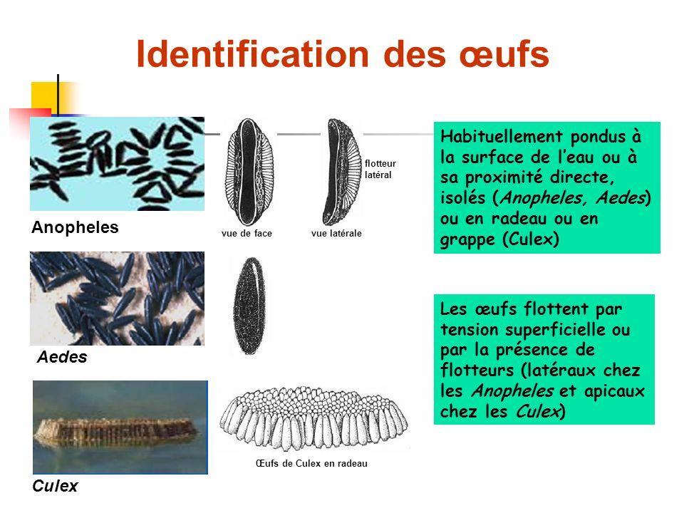 Identification des œufs