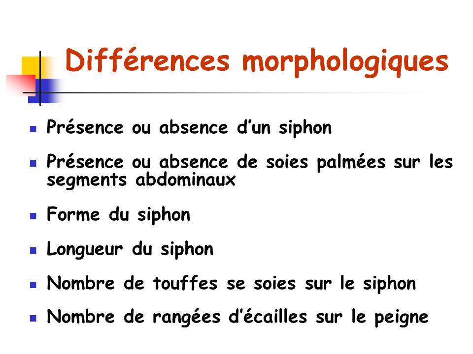Différences morphologiques