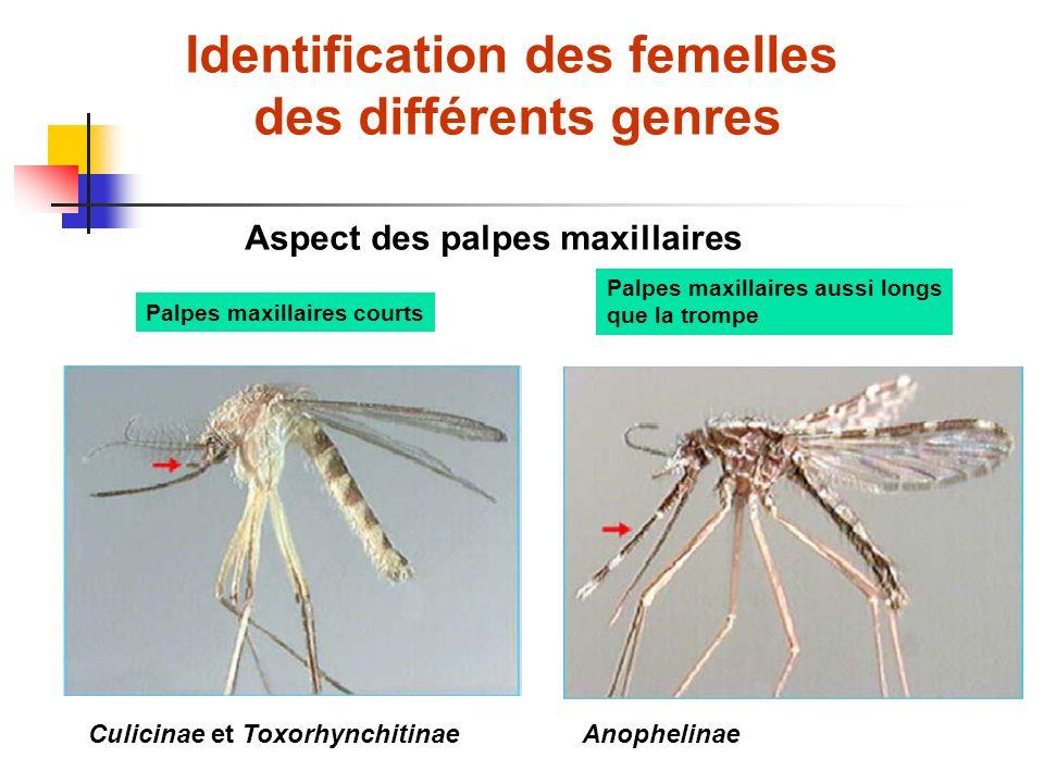 Identification des femelles