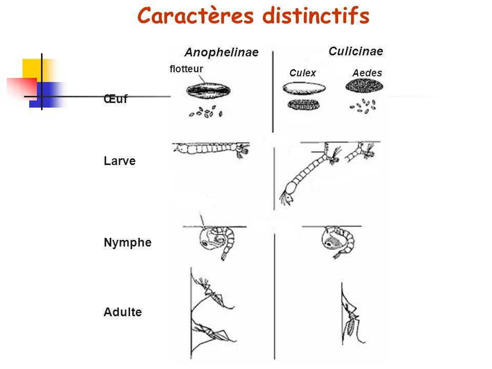 Caractères distinctifs