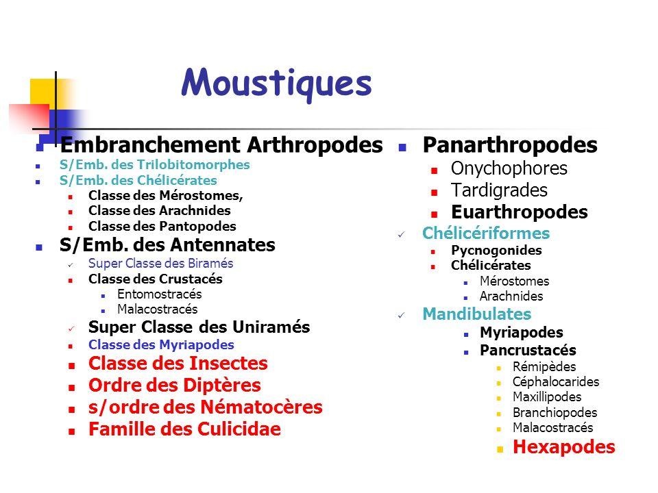 Moustiques Embranchement Arthropodes Panarthropodes Onychophores