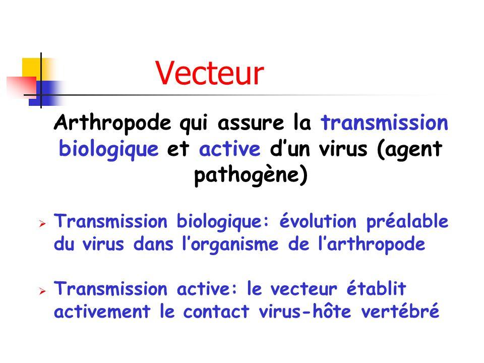 Vecteur Arthropode qui assure la transmission biologique et active d'un virus (agent pathogène)