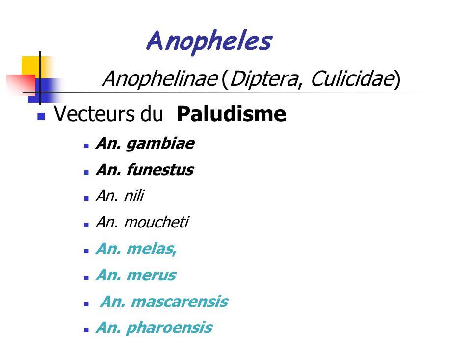 Anophelinae (Diptera, Culicidae)