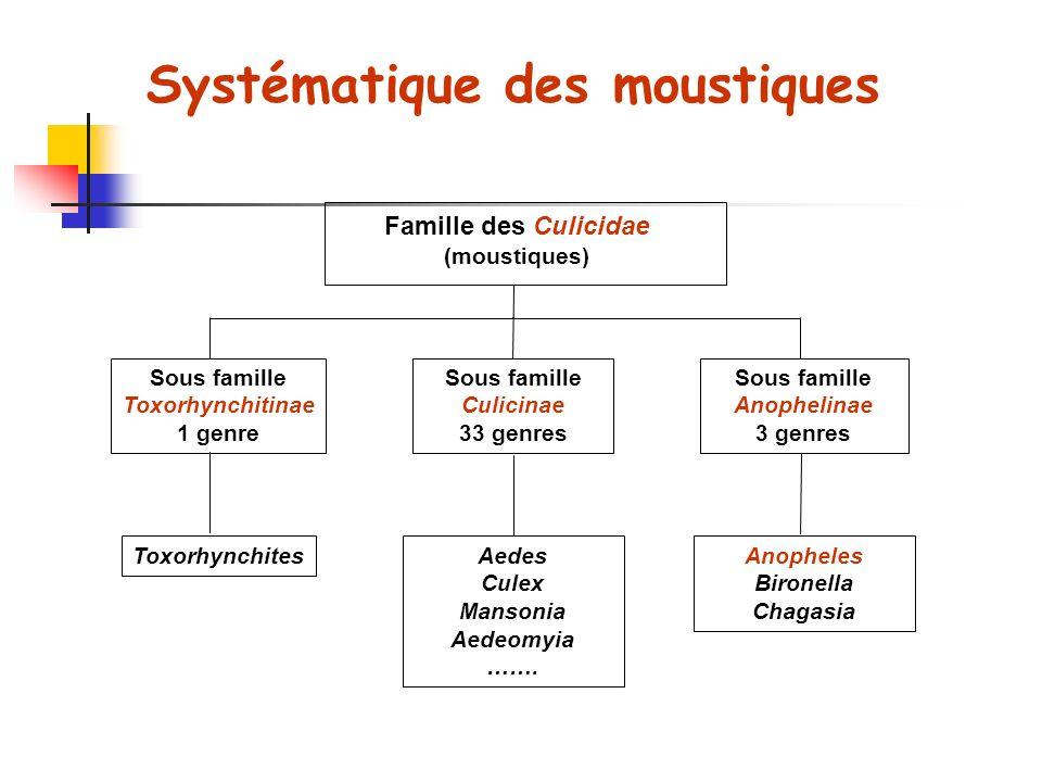 Systématique des moustiques