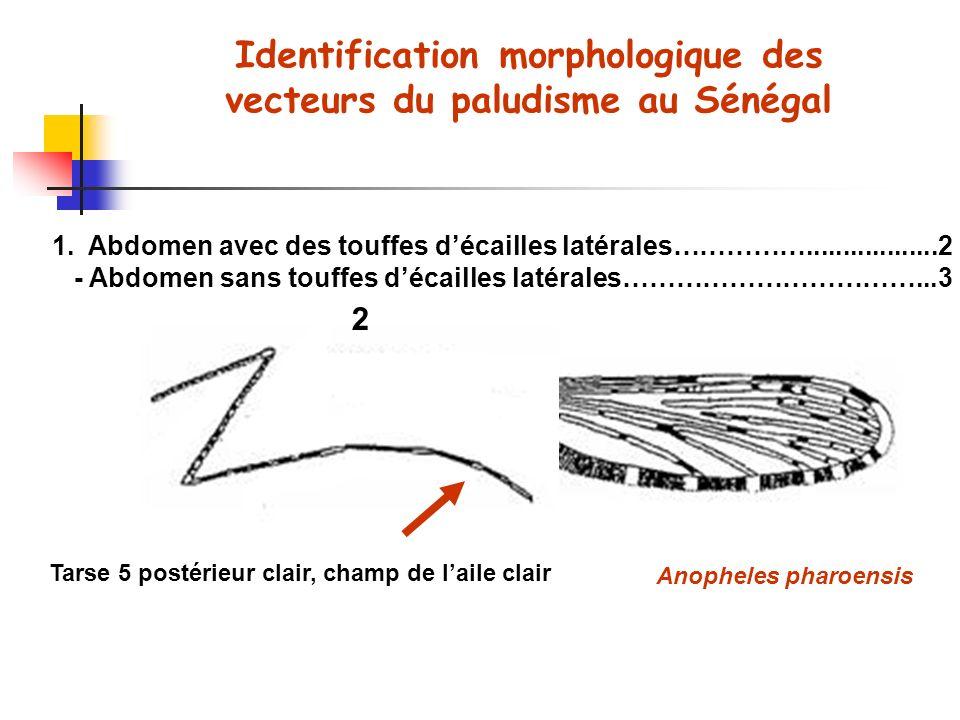 Identification morphologique des vecteurs du paludisme au Sénégal