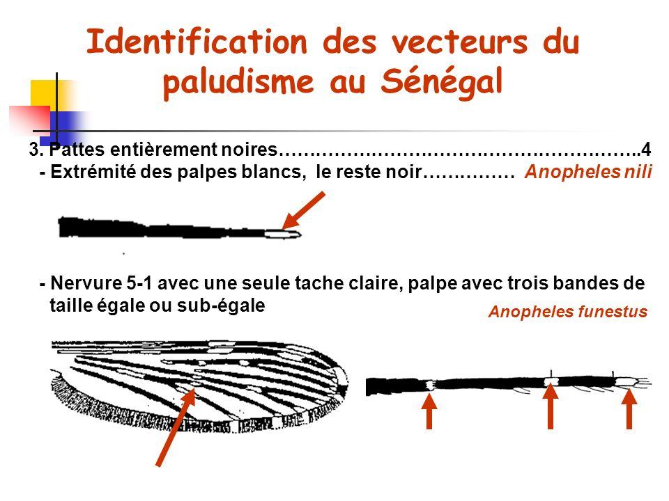 Identification des vecteurs du