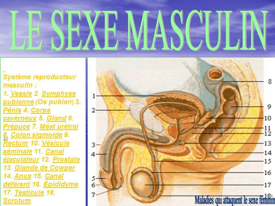 Maladies qui attaquent le sexe féminin