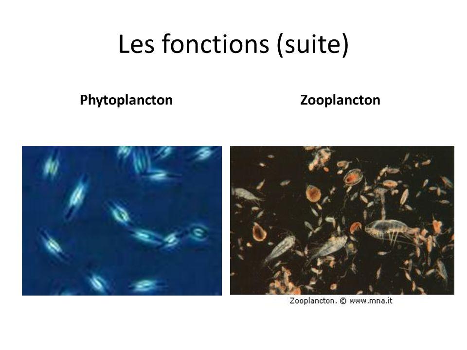 Les fonctions (suite) Phytoplancton Zooplancton