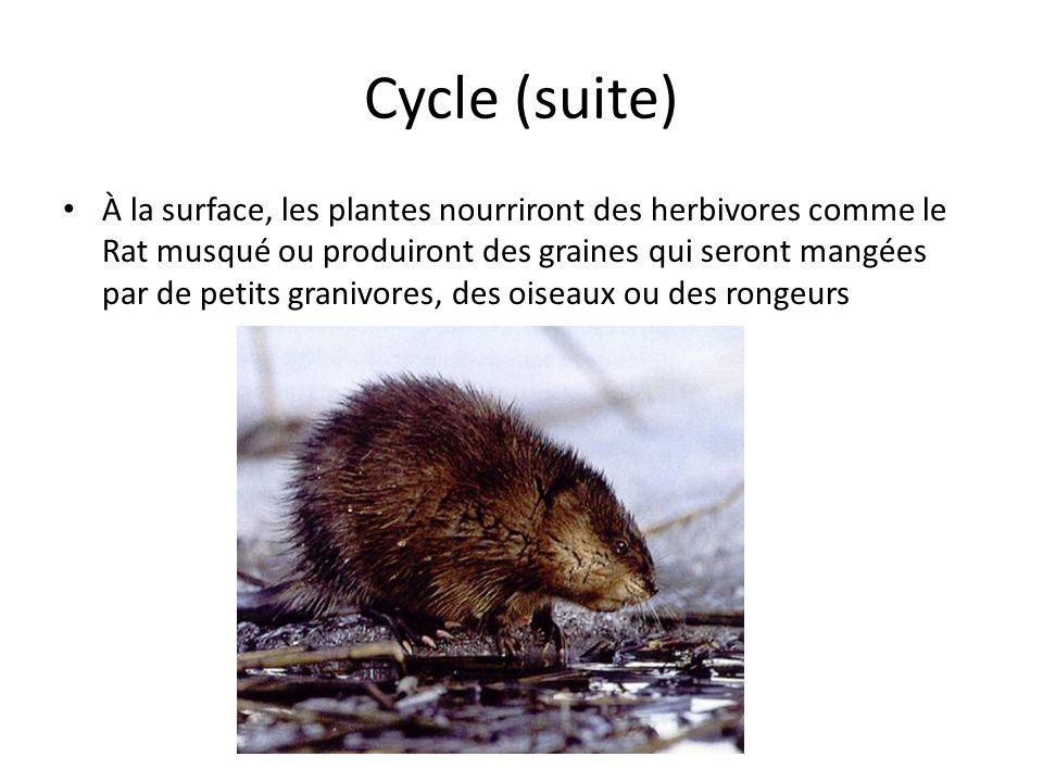 Cycle (suite)