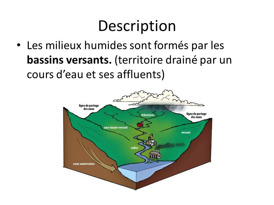 DescriptionLes milieux humides sont formés par les bassins versants.