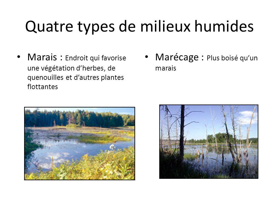 Quatre types de milieux humides