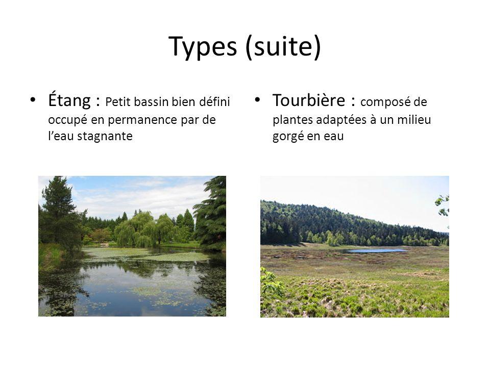 Types (suite)Étang : Petit bassin bien défini occupé en permanence par de l'eau stagnante.